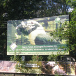 NFEFI Biodiversity Conservation Center:  A Haven for Endangered Negros Wildlife