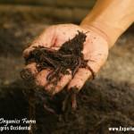 Fresh Start Organics Farm in Silay: A Showcase on Sustainable Farming
