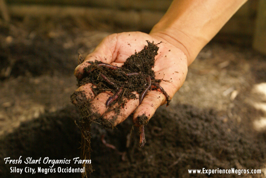 fresh start organics essay African night crawlers at fresh start organics farm these worms have a voracious appetite a gram of worm will also eat an equivalent amount of waste.