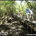 Balaring Mangrove: A Showcase of Sustainable Ecotourism