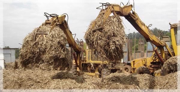 san carlos biomass