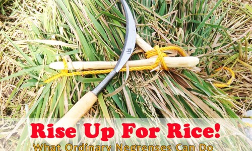 Rise Up For Rice! What Ordinary Negrenses Can Do to Help the Rice Industry